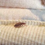 Pre-travel Treatment For Bedbug Prevention