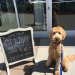 A List of Dog-Friendly Stores & Restaurants