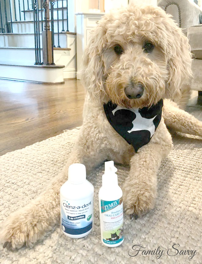 A Savvy 2-Step Routine to Prevent Bad Breath and Plaque in Dogs (and Cats)