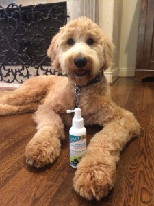 a savvy 2-step routine to prevent bad breath and plague in dogs and cats