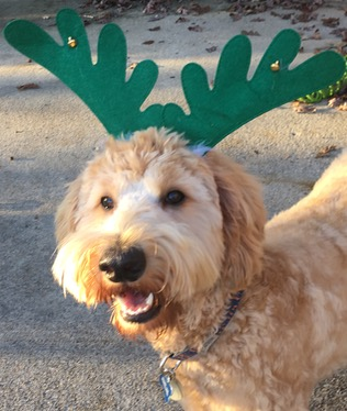 Best Gifts for Dogs 2015