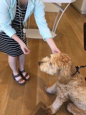 Dog-Friendly Stores in Birmingham | Family Savvy
