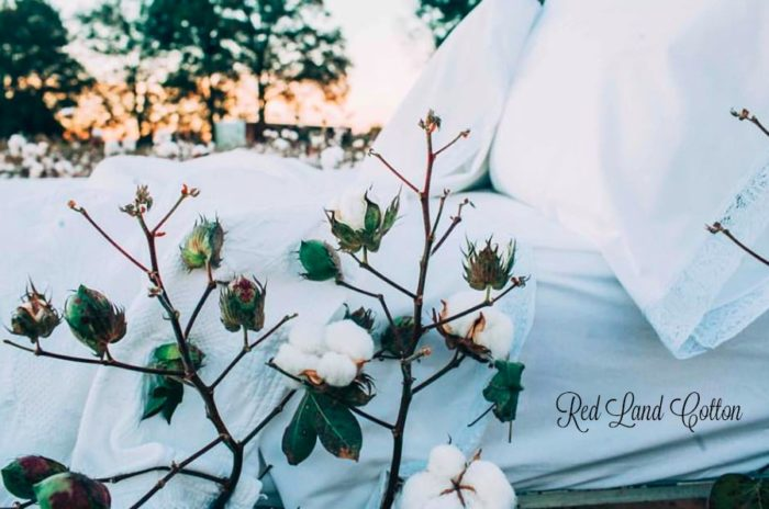 Red Land Cotton: Natural Linens From Farm to Bedroom