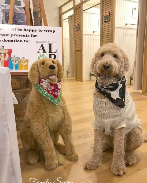 Dog-Friendly Stores in Birmingham