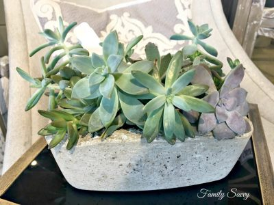 Ways to Use Succulents in Home Decor