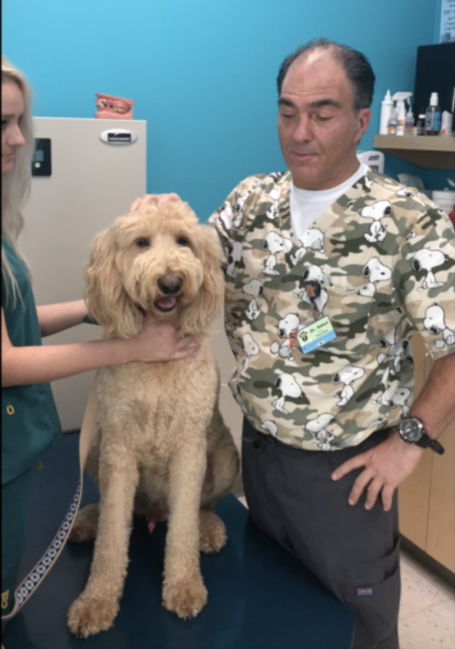 a vet discusses dog dental health and teeth cleaning