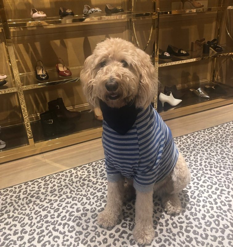 Taking Your Dog Shopping: The When, Where & Wear