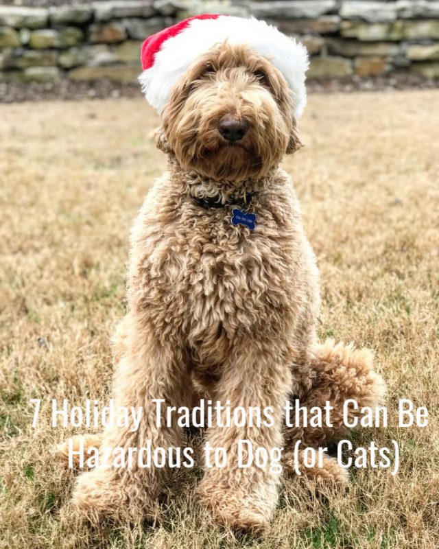 These 7 Holiday Traditions Can Be Hazardous to Dogs (and Cats)
